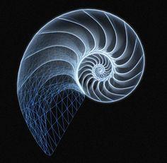 chambered-nautilus
