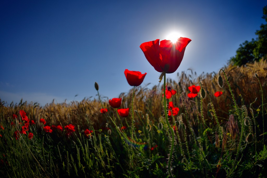 Anzac Day – Remembrance | Well-Aware-Ness